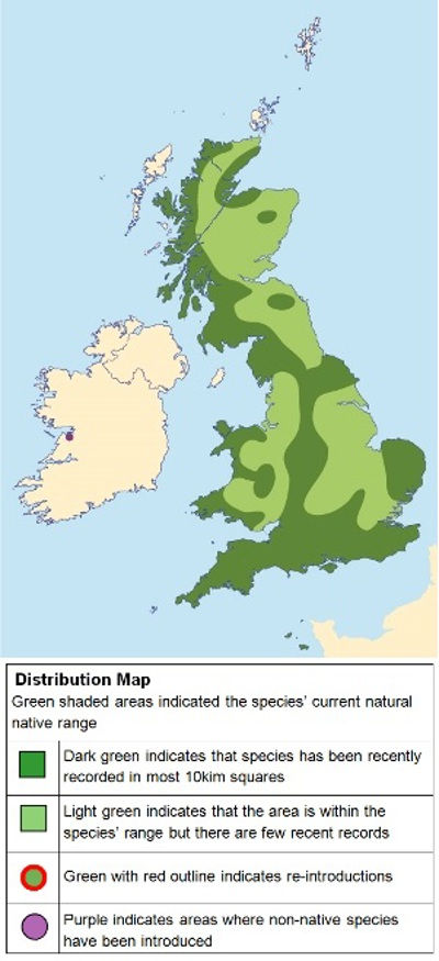 Distribution map of slow-worms in the UK