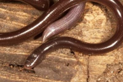 Read: WANTED! Have you seen this snake?