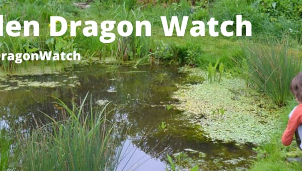 Garden Dragon Watch 2021