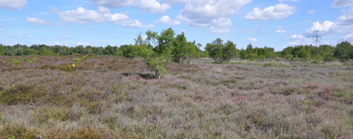 Lowland Dry Heath
