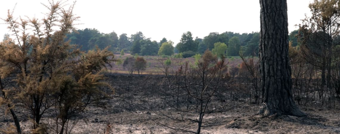 Heath fire at Sunningdale nature reserve