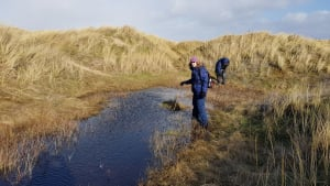 Call for Cumbria Natterjack Toad Recorders