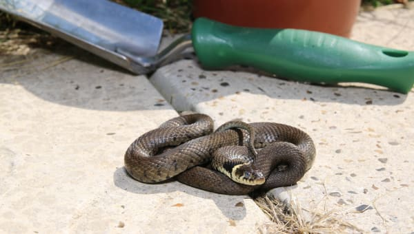 Summer Snake Stocktake