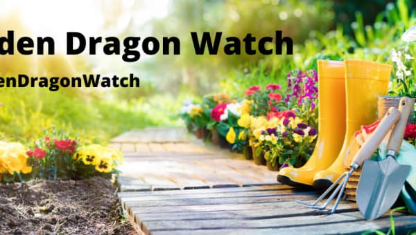 Garden Dragon Watch
