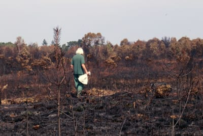 Read: Sunningdale heath fire: update