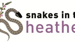 Snakes in the Heather - Citizen Science & Operations Officer availability 2020