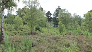 Chatley Heath