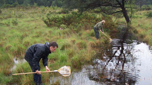 National Amphibian and Reptile Recording Scheme