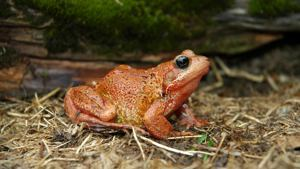 Frogs & toads FAQs